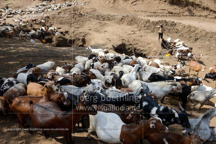 ETHIOPIA, Southern Nations, Lower Omo valley, Kangaten, village Kakuta, Nyangatom tribe, shepherds give water to their goats from water holes at dry river Kibish / AETHIOPIEN, Omo Tal, Kangaten, Dorf Kakuta, Nyangatom Hirtenvolk, Hirten traenken das Vieh aus Wasserloechern am trocknen Fluss Kibish