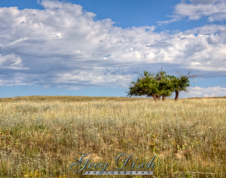Trees are few and far between in the Cimarron National Grassland in Western Kansas.
