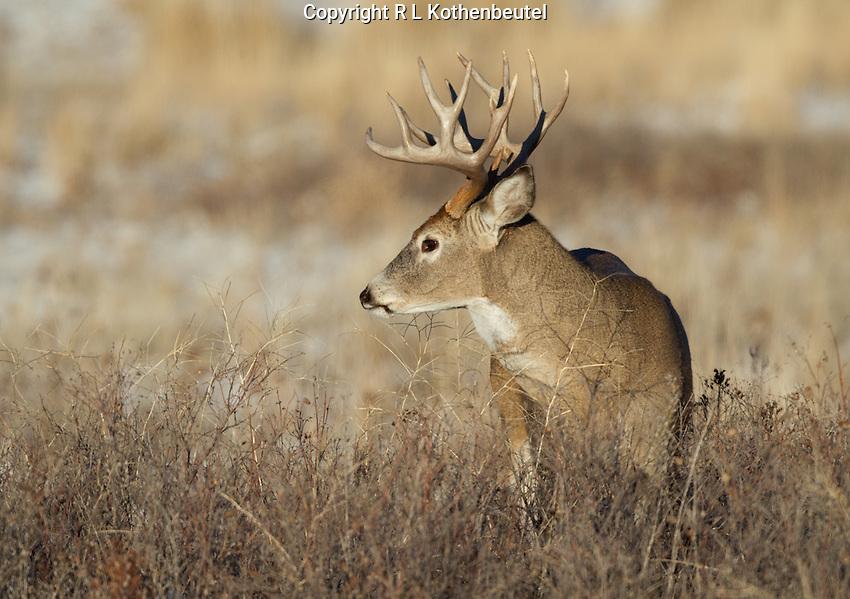 Bison Range near St. Ignatius, Montana<br /> 11/15/2014