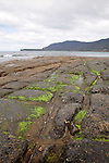 Tesselated Pavement, Tasman Peninsula, Tasmania