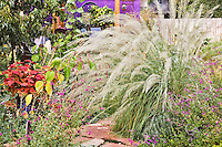 A single geyser of ornamental grass creates a dramatic display in September in Dan Johnson's Denver garden.