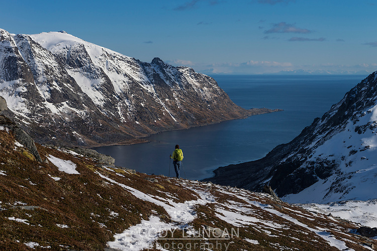Female hiker descending rocky ridge towards Skjelfjord from Volandstind, Flakstadøy, Lofoten Islands, Norway