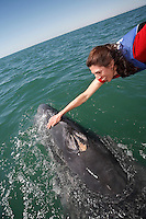 pr7115-D. Gray Whale (Eschrichtius robustus), playful calf interacts with happy tourist (model released). San Ignacio Lagoon, Baja, Mexico. .Photo Copyright © Brandon Cole. All rights reserved worldwide.  www.brandoncole.com..This photo is NOT free. It is NOT in the public domain. This photo is a Copyrighted Work, registered with the US Copyright Office. .Rights to reproduction of photograph granted only upon payment in full of agreed upon licensing fee. Any use of this photo prior to such payment is an infringement of copyright and punishable by fines up to  $150,000 USD...Brandon Cole.MARINE PHOTOGRAPHY.http://www.brandoncole.com.email: brandoncole@msn.com.4917 N. Boeing Rd..Spokane Valley, WA  99206  USA.tel: 509-535-3489