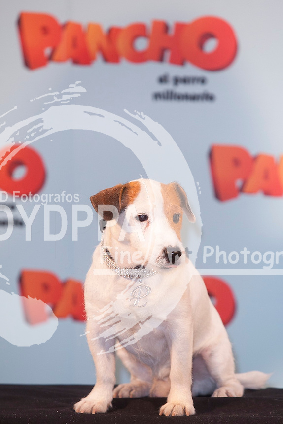 MADRID, SPAIN - JUNE 3 Spanish Actress Patricia Conde attends the 'Pancho. El Perro Millonario' Madrid Photocall on June 3, 2014 in Hotel NH Palacio de Tena Madrid, Spain. Photo by Nacho Lopez/ DyD Fotografos-DYDPPA