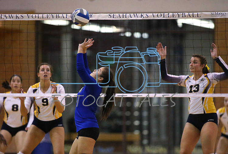 Marymount's Ashley Cabrera sets in a college volleyball game against St. Mary's in Lexington Park, MD, on Wednesday, Oct. 29, 2014. Marymount won 3-2 to go 24-9 on the season.<br /> Photo by Cathleen Allison