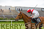 """Call ME BEN"" winner of the Dr Arthur Spring 'In Memory' race . at  the The North Kerry Harriers Point to Point in Ballybeggan Racecourse on Saturday"