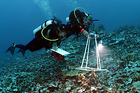 scientists recording data on a transect, Lisianski, Papahanaumokuakea Marine National Monument, Northwestern Hawaiian Islands, Hawaii, USA, Pacific Ocean