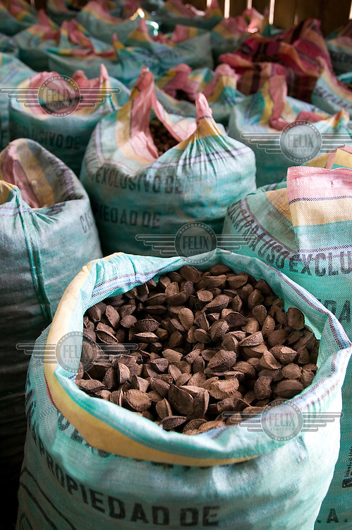 Bags of Brazil nuts in the Puerto Oro Community, ready for export..