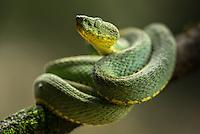 Ecuador snakes 2014