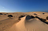 Sand dunes, Corralejo,Fuerteventura, Canary Islands,Spain.