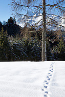 Neat tracks in the snow lead to a fir tree with an imposing mountain peak beyond