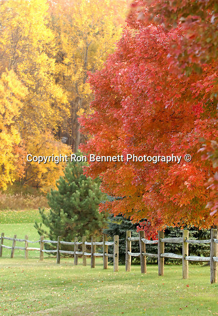 Fall yellow red leaves with fence, Commonwealth of Virginia,