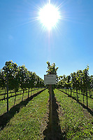 Germany, Baden-Wuerttemberg, Markgraefler Land, wine village Staufen; wine growing area for fine Riesling, white wine