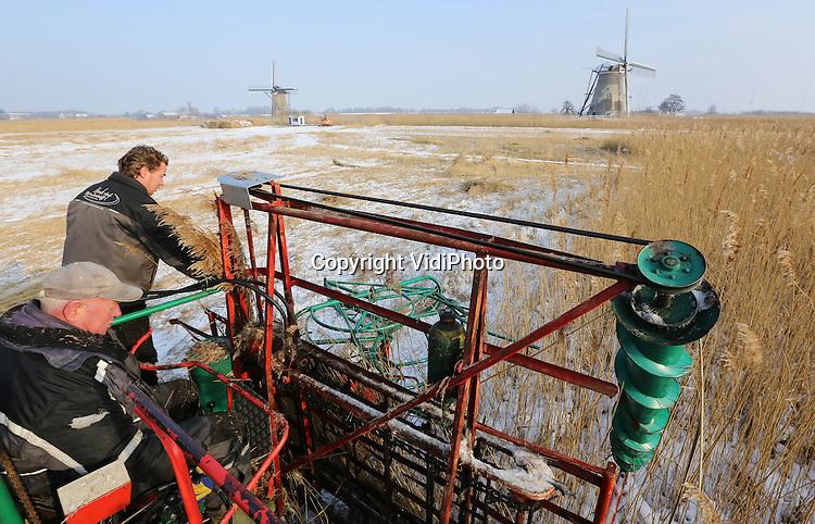 Foto: VidiPhoto..KINDERDIJK - In opdracht van Waterschap Rivierenland snijden Arie Hoek en zonen uit Kinderdijk dinsdag het riet bij de molens van Kinderdijk. Dankzij de vorst is het gebied nu goed toegankelijk. Het riet van het 120 ha. grote gebied, dat vroeger gebruikt werd om de duinen te beschermen en voor de daken van boerderijen, is dankzij de komst van goedkoop riet uit China vrijwel niets meer waard. Het meeste wordt verwerkt tot compost. Van het mooiste riet worden matten gemaakt. De meeste Nederlandse rietsnijders zijn nu in feite natuurbeheerders. Arie Hoek moet voorkomen dat het gebied niet verandert in een wildernis en de wereldberoemde molens daardoor niet meer zichtbaar zijn of geen wind meer kunnen vangen. Tot het broedseizoen begint, eind maart, is wordt er mechanisch gesneden. Daarna verricht Arie Hoek VOF de nodige onderhoudswerkzaamheden rond de negentien molens..