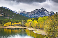 Golden aspen, lake, Kananaskis Valley, Alberta, Canada