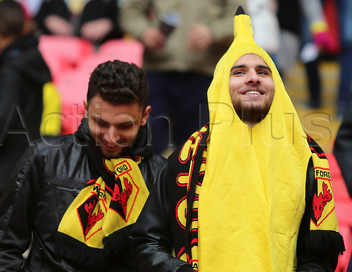 23.04.2016. Wembley Stadium, London, England. Emirates FA Cup Semi Final. Crystal Palace versus Watford. Watfrod fans in fancy dress and team colours
