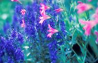 Wild flowers, Sweden
