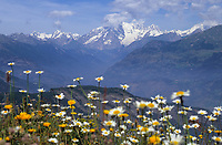 Europe/Italie/Val d'Aoste: Paturages et  Mont-Blanc