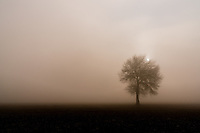 A lone tree stands in the middle of some farmland.