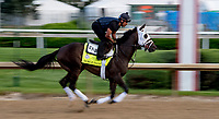 LOUISVILLE, KY - MAY 02: Noble Indy works out on the track in preparation for the Kentucky Oaks at Churchill Downs on May 2, 2018 in Louisville, Kentucky. (Photo by Sydney Serio/Eclipse Sportswire/Getty Images)