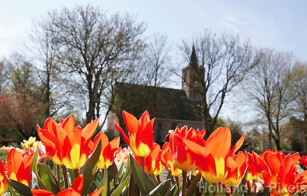 Nederland Limmen 2016 04 21. Hortus Bulborum in Limmen. In de tuin staan meer dan 4000 soorten bloemen. De hortus, waarin voornamelijk tulpen staan, is in 1928 opgericht. De Hortus Bulborum is  een proeftuin, waar nieuwe soorten worden gekweekt. Op de achtergrond de Protestantse kerk van Limmen. Foto Berlinda van Dam / Hollandse Hoogte
