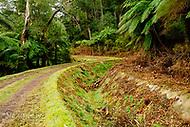 Image Ref: YV294<br /> Location: O'Shannassy Aqueduct Trail<br /> Date: 26.08.18
