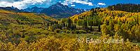 Aspen, Willow Swamp, Mount Sneffels, Dallas Divide, Uncompahgre National Forest, Colorado