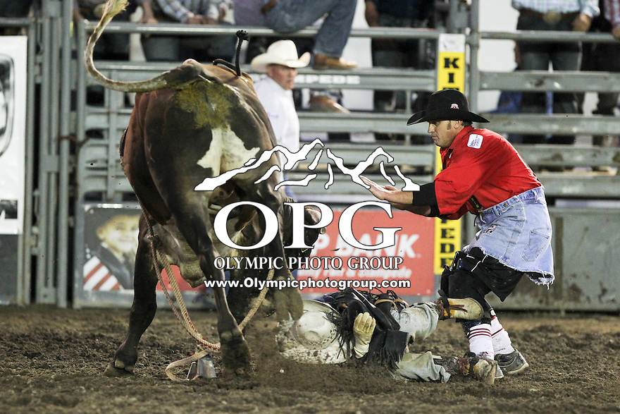 21 Aug 2013:  Jed Jones riding the bull Twin Turbo gets up in close after being bucked off during the third round of competition of the Extreme Bulls Wednesday at the Kitsap County Fair and Stampede Rodeo in Bremerton, Washington.
