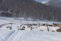 Altai Region, Siberia, Russia, 25/02/2011..Reindeer and other animals at the Kaimskoe leisure resort, part owners of the proposed Siberian Coin casino project in the Altai mountains.