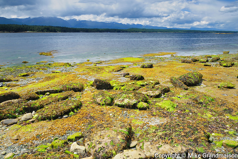 Shoreline along the Pacific Ocean<br /> Hornby Island in the Gulf Islands<br /> British Columbia<br /> Canada