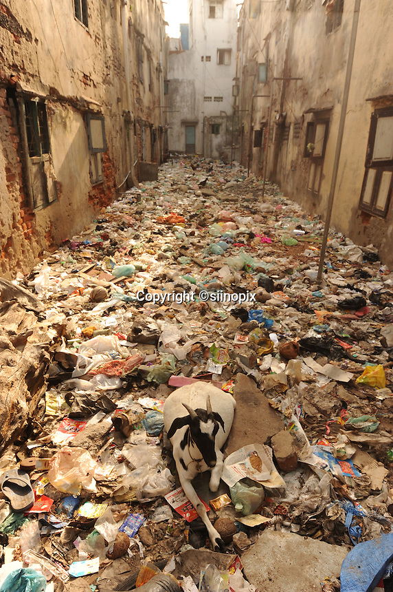 Goats are in the very dirty street covered with rubbish in Madras, India