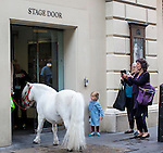 Pic shows: <br /> Auditioning for Swan Lake? Or masquerading as Nijinsky<br /> This small white Shetland pony was spotted being walked through Central London today. 30/9/16<br /> Peregrine is appearing in  La Fille mal gard&eacute;e   - at the Royal Opera House in Covent Garden.<br /> <br /> He turned heads everywhere.<br /> Especially the small girl who saw him enter the stage door much to the delight of all around.<br /> <br /> Photographer spotted owner George Gold walking the placid pony through crowded streets of Strand and Westminster Embankment, at first thinking it was large dog.<br /> The clever pony tackled all on the commute climbing stairs to cross the River Thames over Hungerford Bridge.<br /> <br /> <br /> <br /> <br /> <br /> picture by Gavin Rodgers/ Pixel8000
