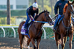 October 28, 2019 : Breeders' Cup Mile entrant Snapper Sinclair, trained by Steven M. Asmussen, exercises in preparation for the Breeders' Cup World Championships at Santa Anita Park in Arcadia, California on October 28, 2019. John Voorhees/Eclipse Sportswire/Breeders' Cup/CSM