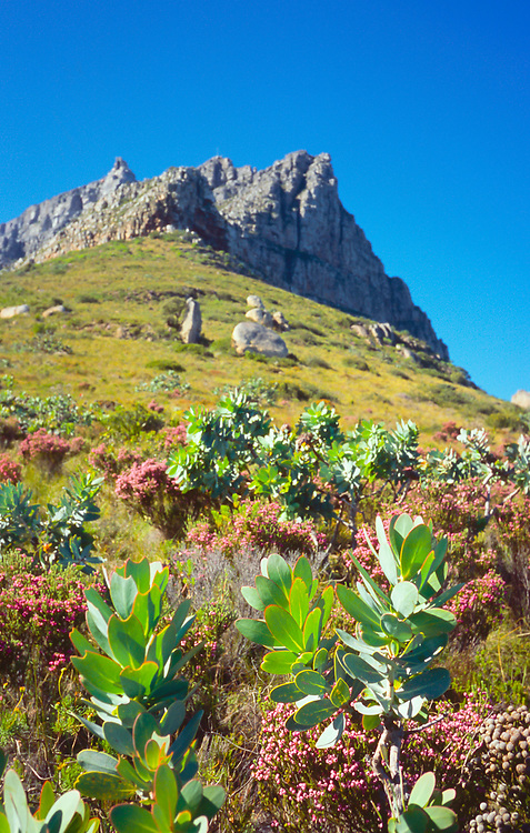 Table Mountain, Cape Town, South Africa, october 2017