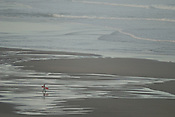 Surfer, Pacific Ocean, at Sunset Beach, San Francisco