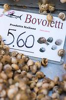 Italie, Vénétie, Venise:  Marché du Rialto, sestiere de San Polo -  La Pescheria , marché aux poissons ; Theba pisana // Italy, Veneto, Venice:  Rialto market, San Polo sestiere : White Italian snail