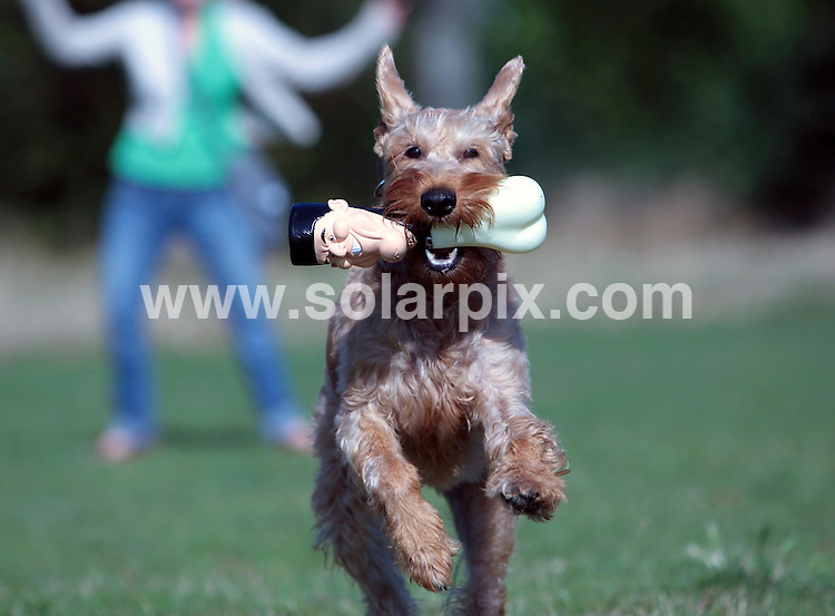 "**ALL ROUND PICTURES FROM SOLARPIX.COM**.**NO UK NEWSPAPER PUBLICATION**.**UK MAGAZINE & SUPPLEMENT PUBLICATION ONLY** AND NO PUBLICATION IN AUSTRALIA, GERMANY, ITALY AND SCANDINAVIA** .Even dogs can now sink their teeth into Simon Cowell...The ""Si-Bone"" is a giant squeaky plastic bone based on the X Factor judge, proving a popular hit with dog owners...This pic: Simon Cowell dog toy..JOB REF: 10022 SFE       DATE: 25_09_2009.**MUST CREDIT SOLARPIX.COM OR DOUBLE FEE WILL BE CHARGED**.**MUST NOTIFY SOLARPIX OF ONLINE USAGE**.**CALL US ON: +34 952 811 768 or LOW RATE FROM UK 0844 617 7637**"