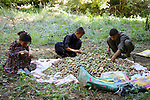 3/10/2012--Syagwez,Sulaimaniyah,Iraq-- Children who help their family by peeling the green skin off the walnuts.