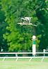 Great Blue Heron flying over Delaware Park on 5/14/12