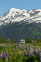 Spring landscape of vehicle traveling on Seward, Highway in the Portage area with lupine and Kenai Mountains.  Southcentral, Alaska<br /> <br /> Photo by Jeff Schultz (C) 2016  ALL RIGHTS RESERVED