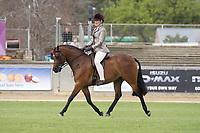 Lightweight Hunter Pony over 12.2 NE 14hh