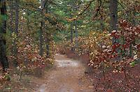 Pine Barrens autumn