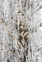 """WINTER WILLOW""<br />