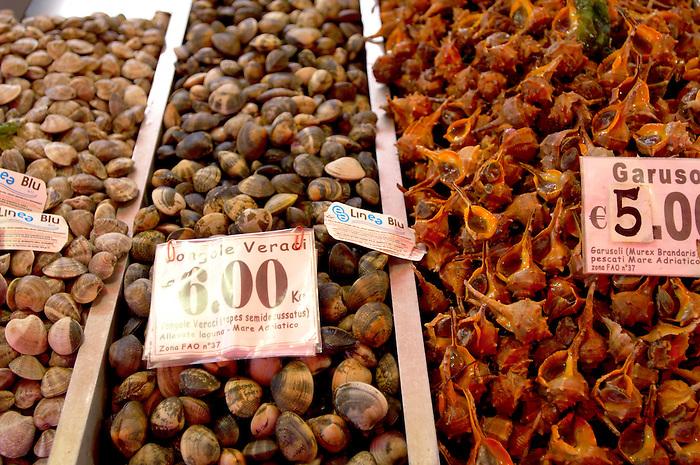 Fresh Shell fish - clams - Chioggia - Venice Italy
