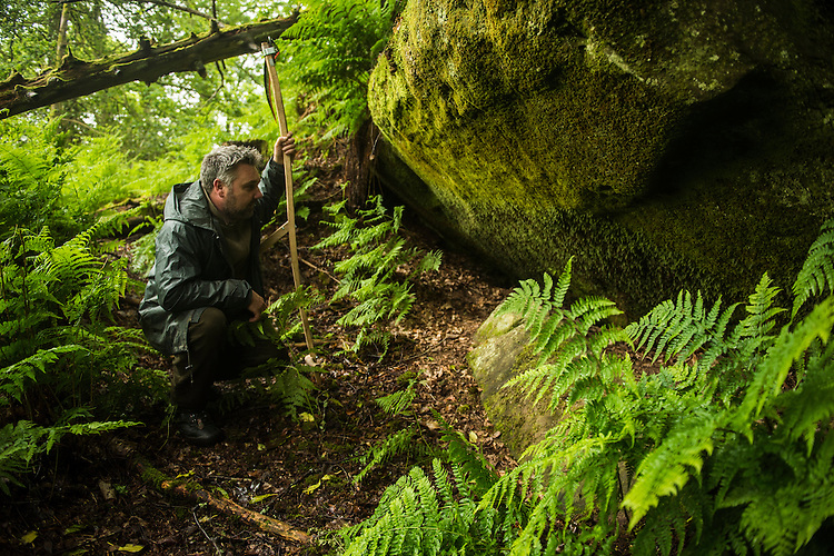Steven Robinson, reserve manager at Wakehurst Place, inspects Tunbridge filmy fern, Hymenophyllum tunbrigense, an incredibly delicate and rare fern whose leaves are only one cell thick. Wakehurst Place - Royal Botanic Gardens, Kew. Ardingly, West Sussex, UK.