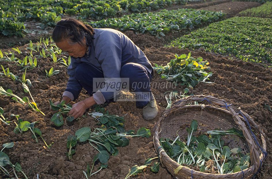 Asie/Chine/Jiangsu/Env de Nankin: La campagne - Paysanne plantant des choux chinois<br /> PHOTO D'ARCHIVES // ARCHIVAL IMAGES<br /> CHINE 1990