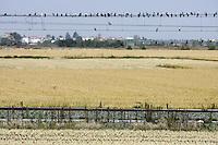 Risaie nel Vercellese.<br /> Rice fields near Vercelli.<br /> UPDATE IMAGES PRESS/Riccardo De Luca