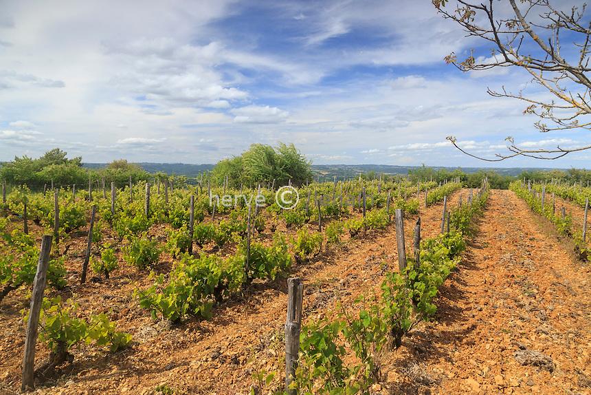 France, Corrèze (19), Ayen, vignoble au sommet du mont d'Ayen (377m), vignes IGP Corrèze (Indication Géographique Protégée Corrèze) // France, Correze, Ayen, vineyard at the Ayen mount