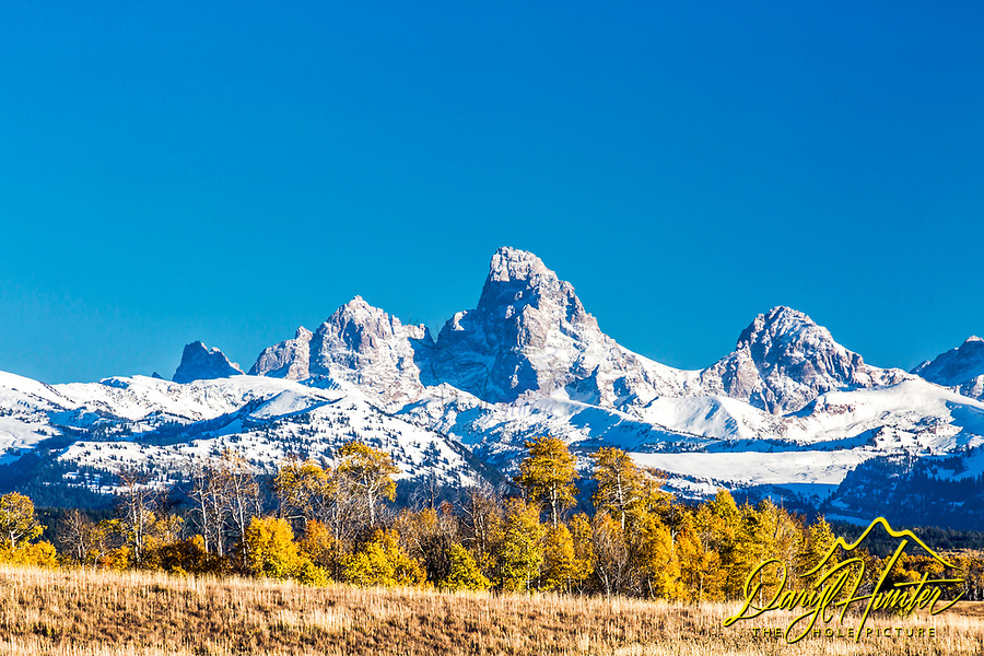 Golden aspen crowned by the Grand Tetons in Teton Valley Idaho.  An autumn snow adds a little spice to this fall scene.
