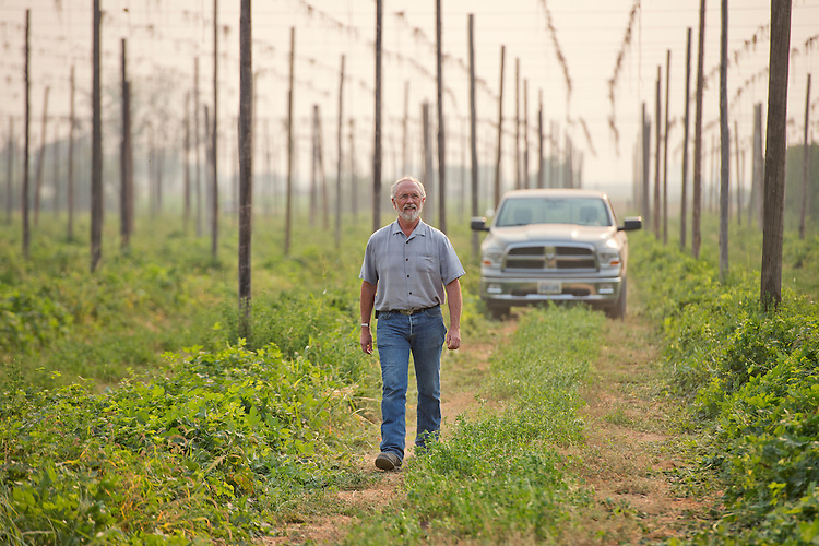 UNITED STATES - AUGUST 27: Rep. Dan Newhouse, R-Wash., inspects hops on his farm that also grows grapes and fruit trees, outside of Sunnyside, Wash., August 27, 2015. About 79 percent of the country's hops come from Washington state. (Photo By Tom Williams/CQ Roll Call)